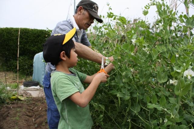 孫と農作業