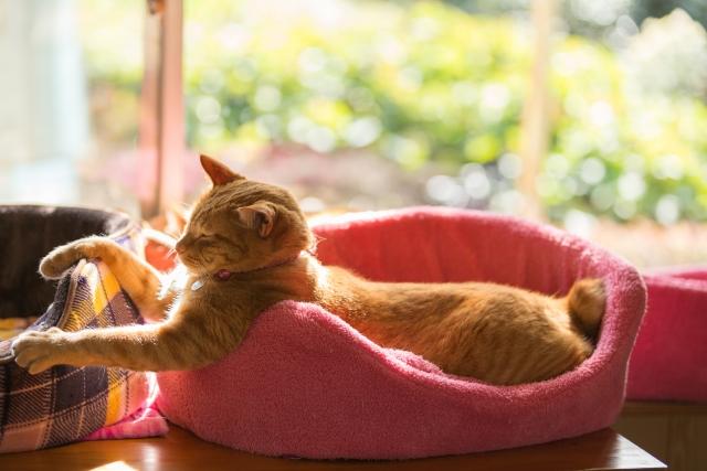 くつろいでいる猫