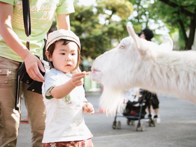 子供とヤギ